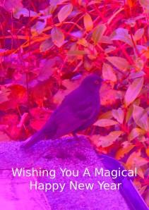 MagicalNewYearBlackbird