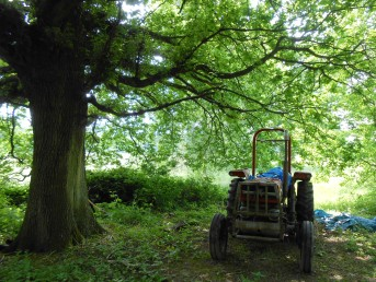 Tractor-in-Woods2