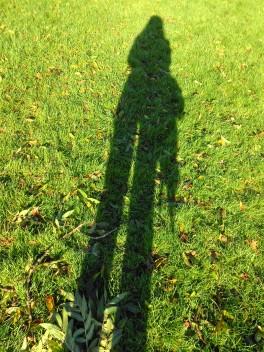 NovemberShadow