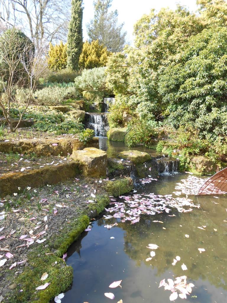 Magnolia petals in stream