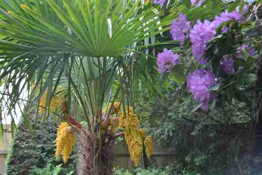 FloweringPalm