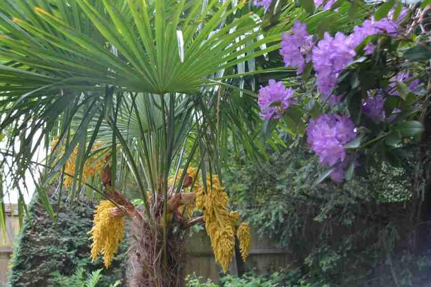 FloweringPalm