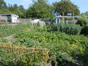 allotment June 14