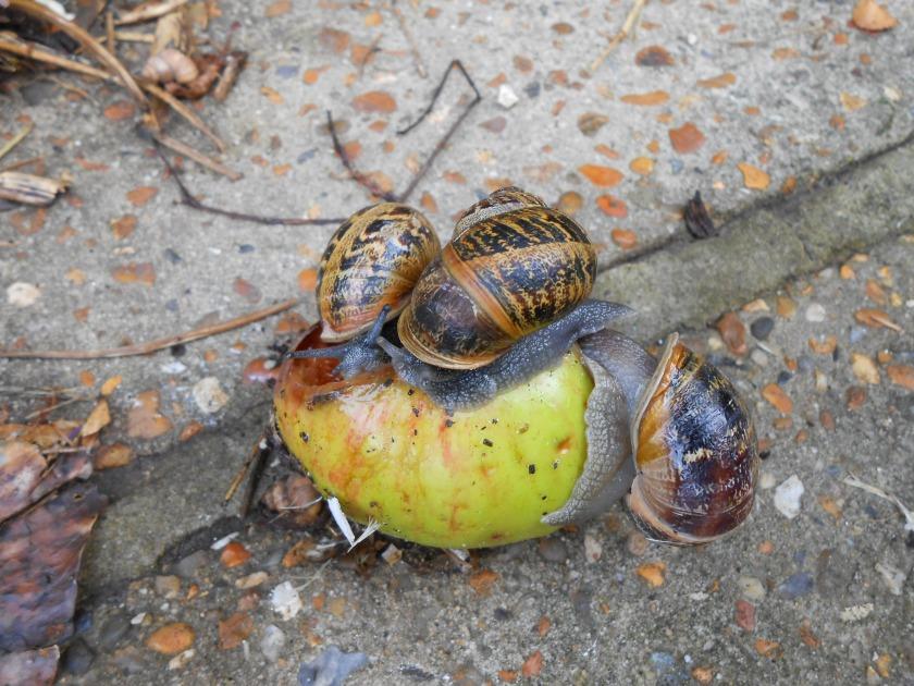 Snails&Apple
