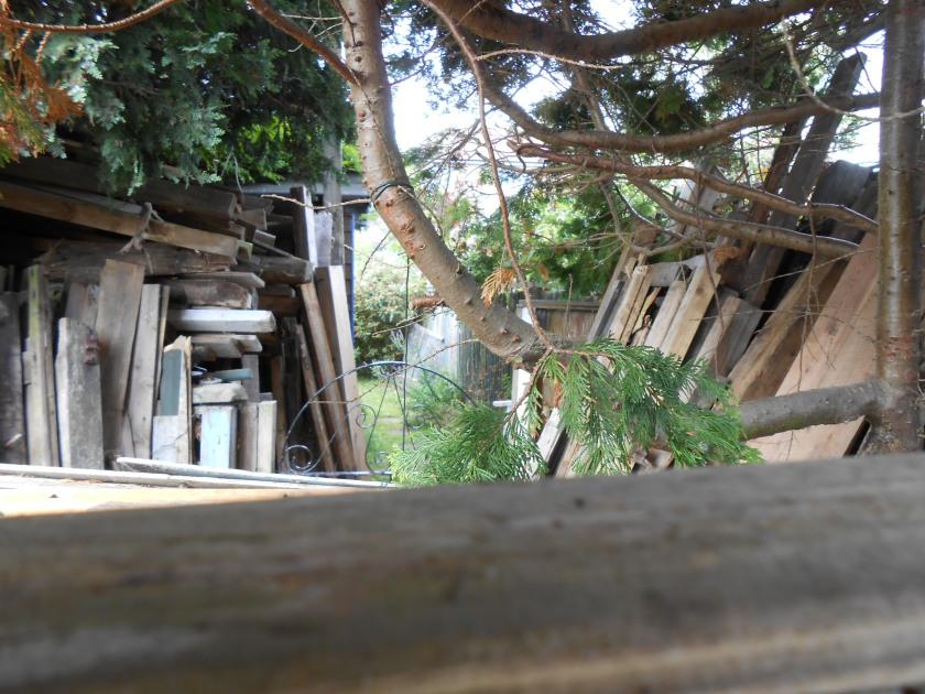 Timber stack 01