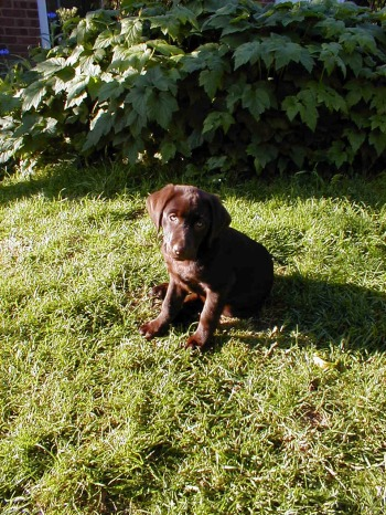 Puppy in garden