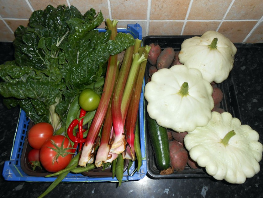 September Harvest Allotment 2014