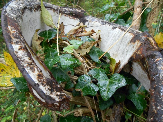 Old Tin Dish in Woods