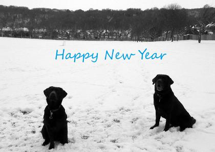 Chocolate Labradors Happy New Year