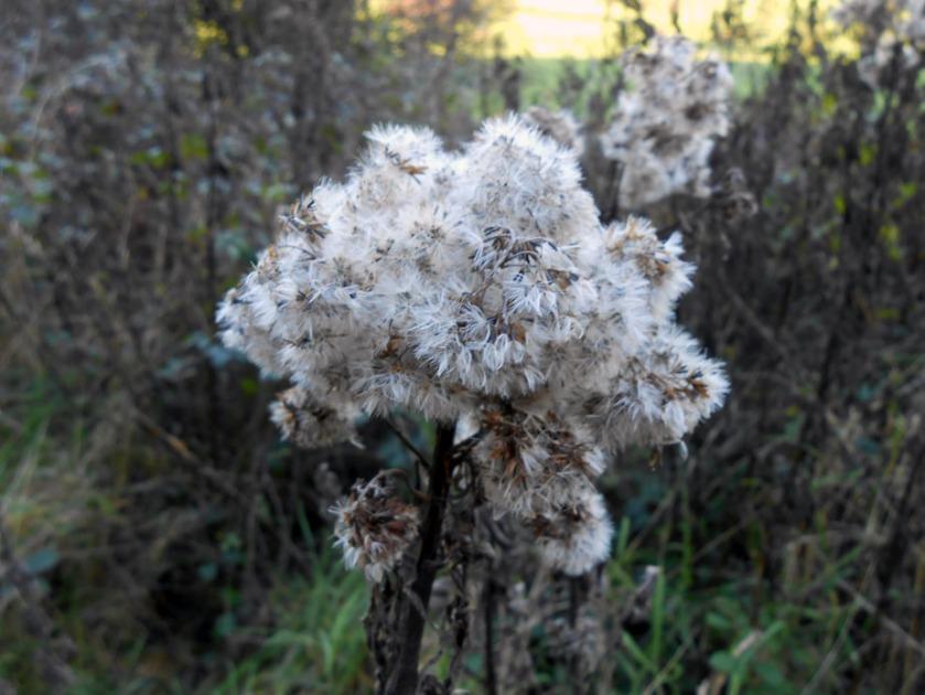 December Seeds