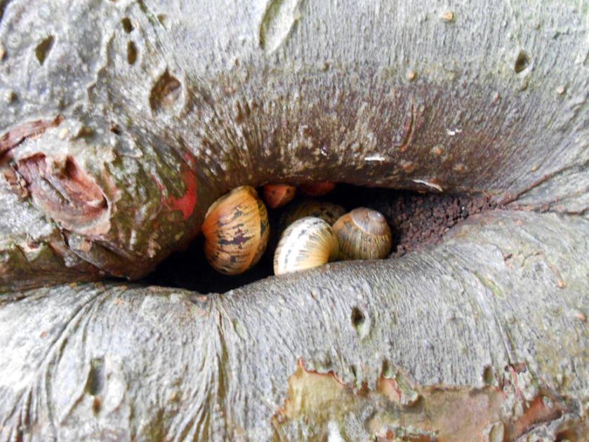 Hibernating Snails
