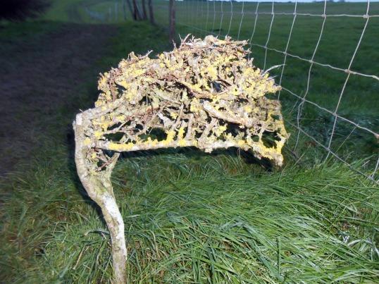 Petrified bush