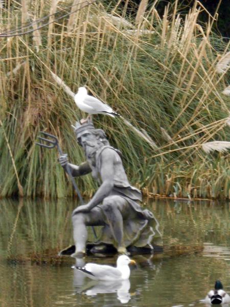 Poisedon & Seagulls