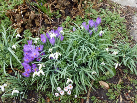Crocuses & Snowdrops