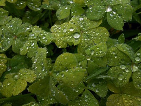 Rainfall on leaves