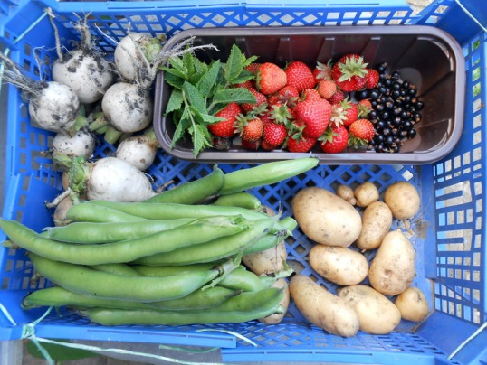 Allotment Produce 24th June