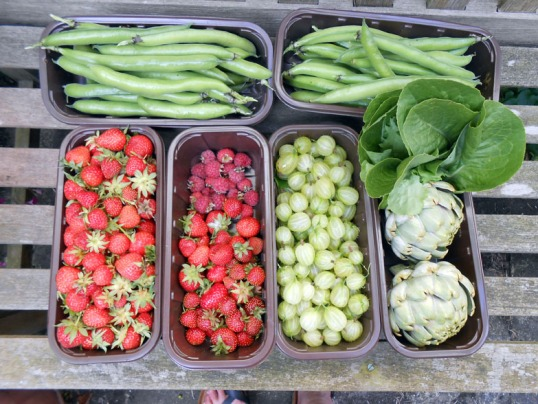 Allotment Produce 27th June