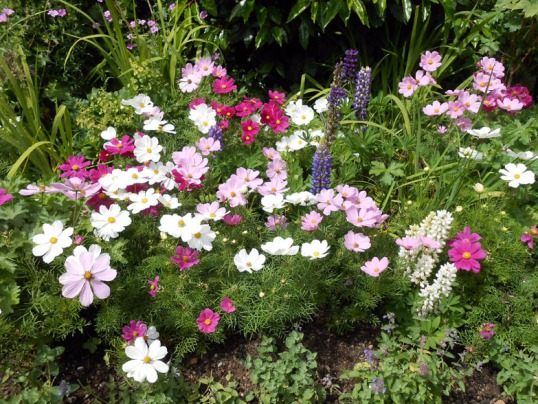 July Herbaceous Border