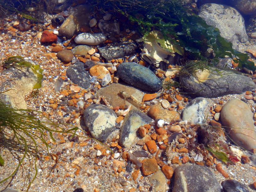 Fish in Rock Pool at Cuckmere Haven