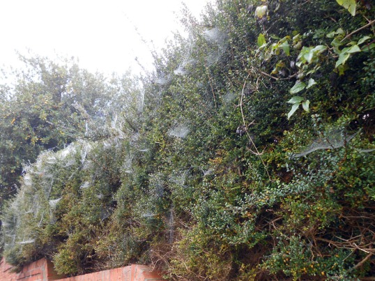 Spiderwebs in mist