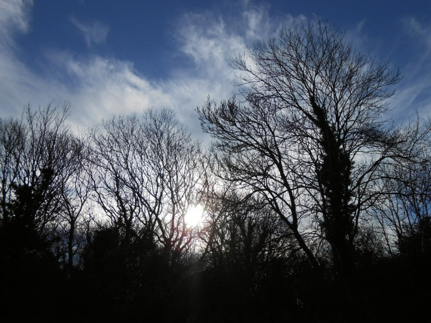 Sun Through Winter Trees