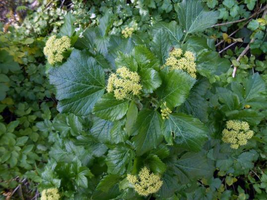 spring vegetation