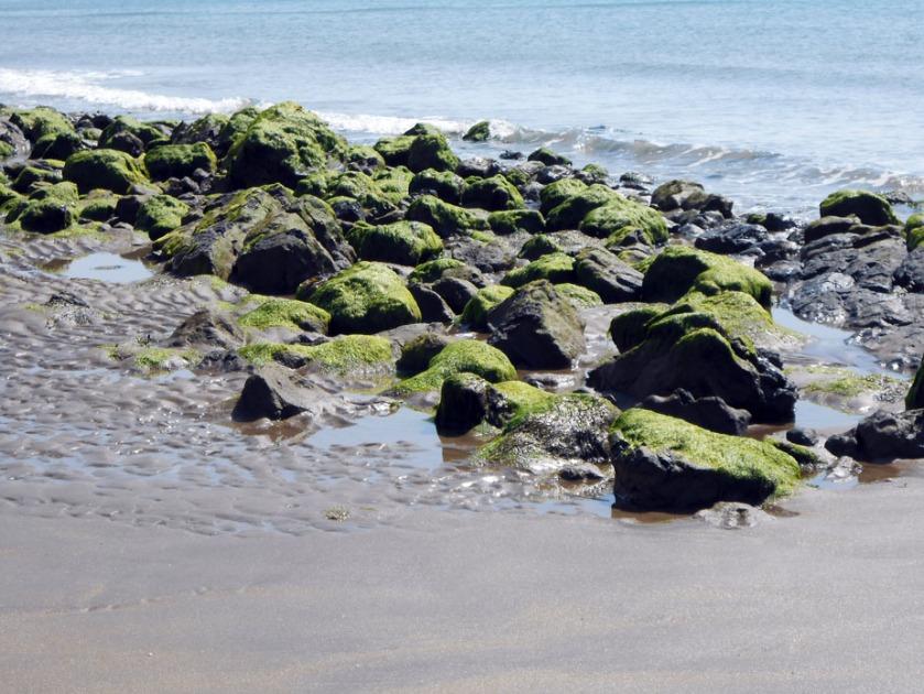 Rocks at lowtide