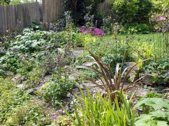 Back garden June (01)
