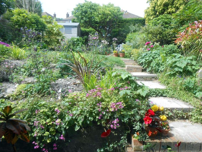 Back garden June (02)