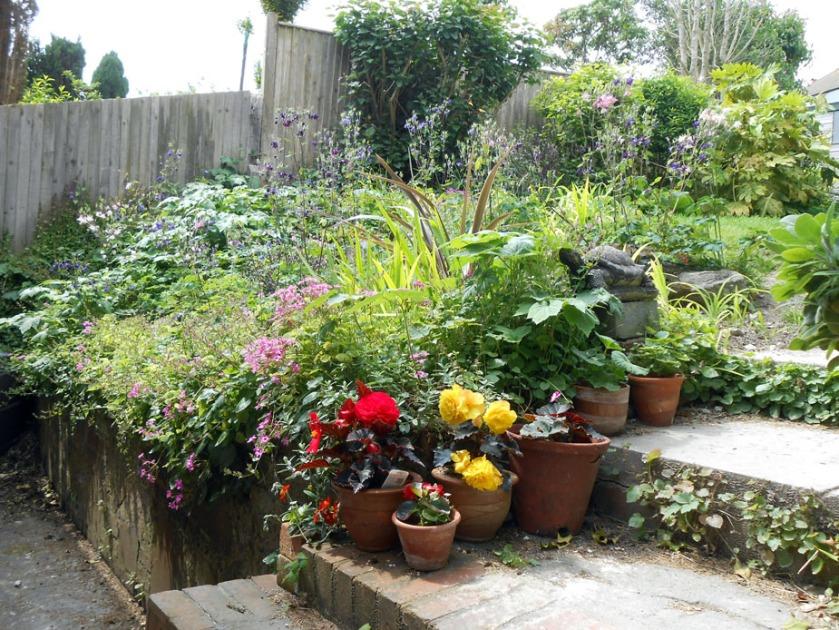 Back garden June (03)