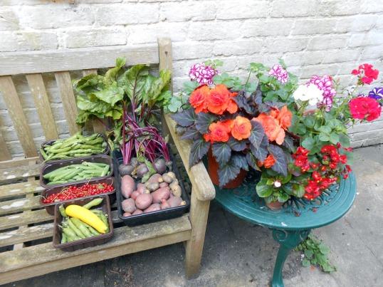 Sunny July's Allotment Produce & Garden Flowers