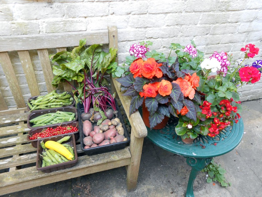 Sunny July's Allotment Produce & Garden Flowers