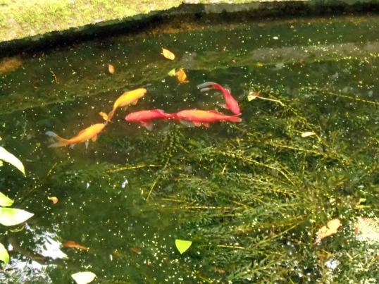 Zen Goldfish