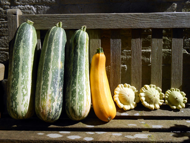 marrows-courgette-and-squashes