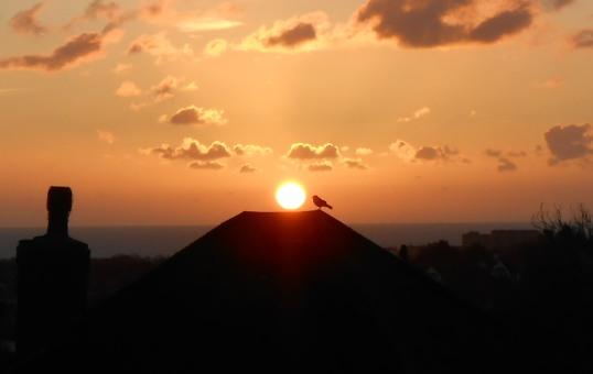blackbird-rising-sun